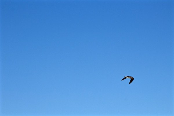 bird flying destin florida
