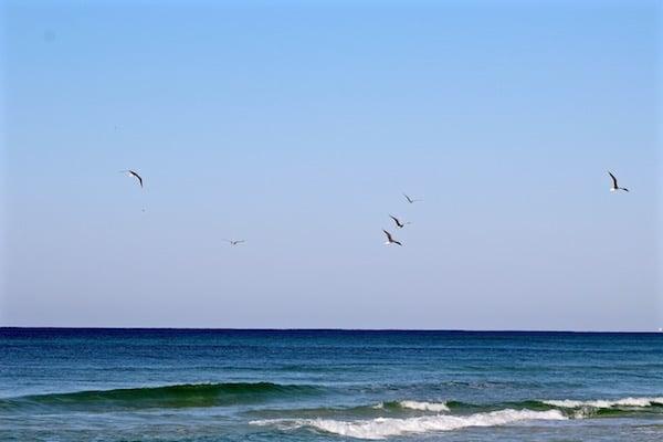 birds flying destin florida