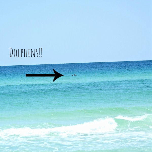dolphins closeup destin florida