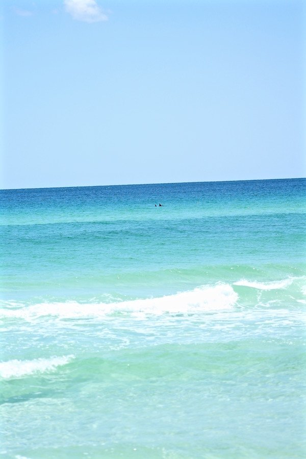 dolphins in ocean destin florida