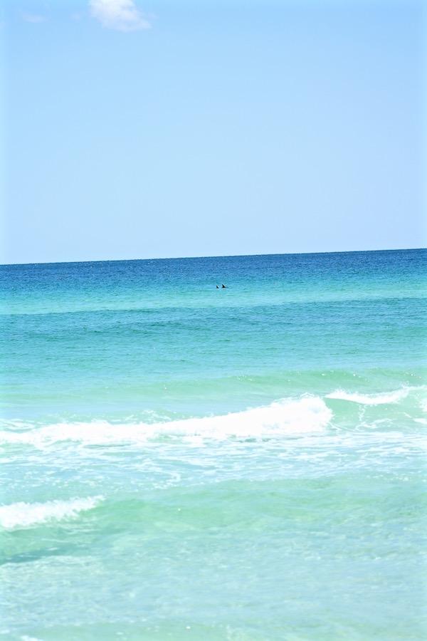dolphins in ocean destin florida