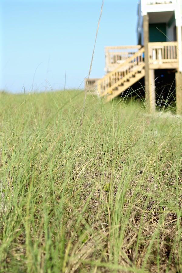 seagrass destin florida beach