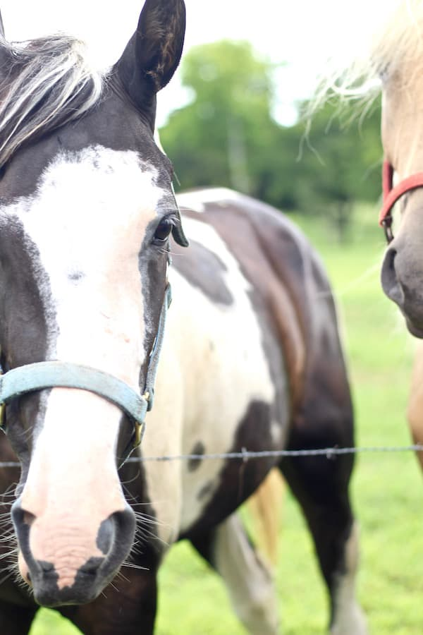 Horses side-by-side